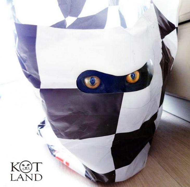 ojos de gato adentro de una bolsa
