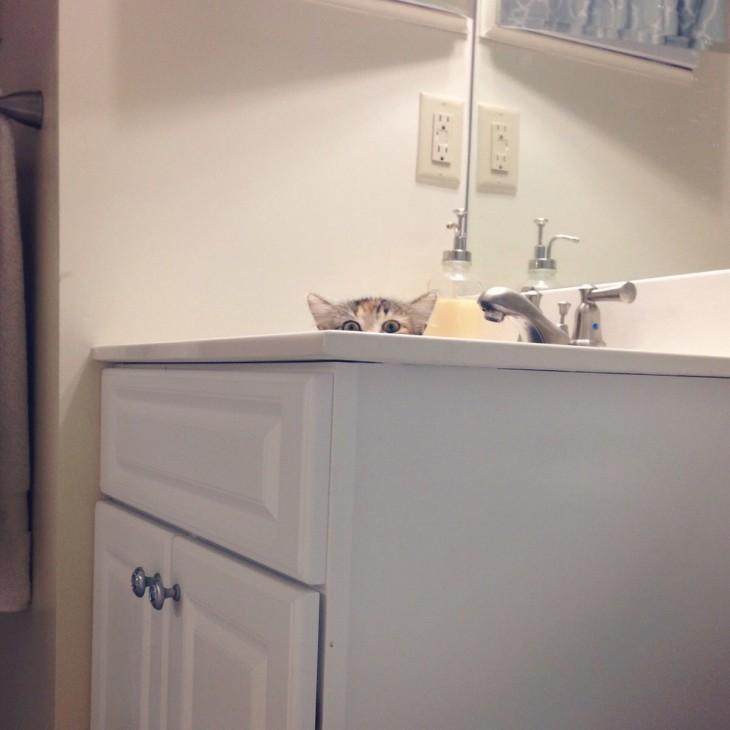 gato blanco en el lavabo