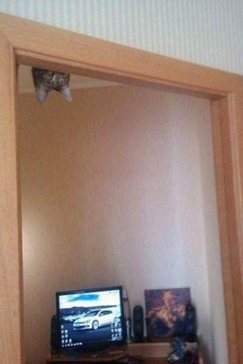 gatp colgado en el techo