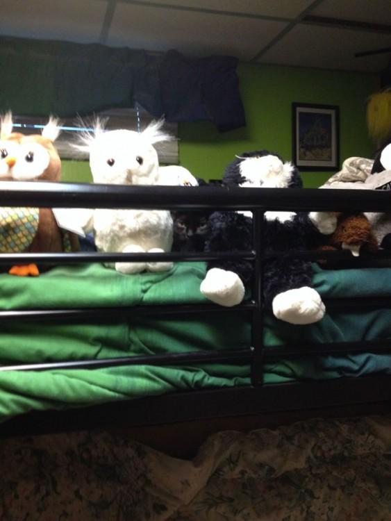 gato con peluches arriba de una cama
