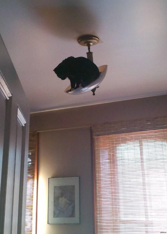 gato negro arriba de una lampara