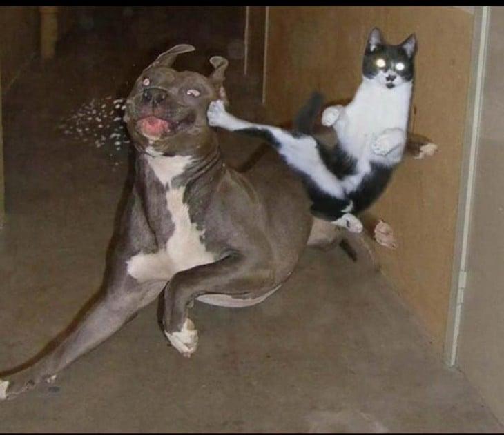 gato metiendole patada a un perro