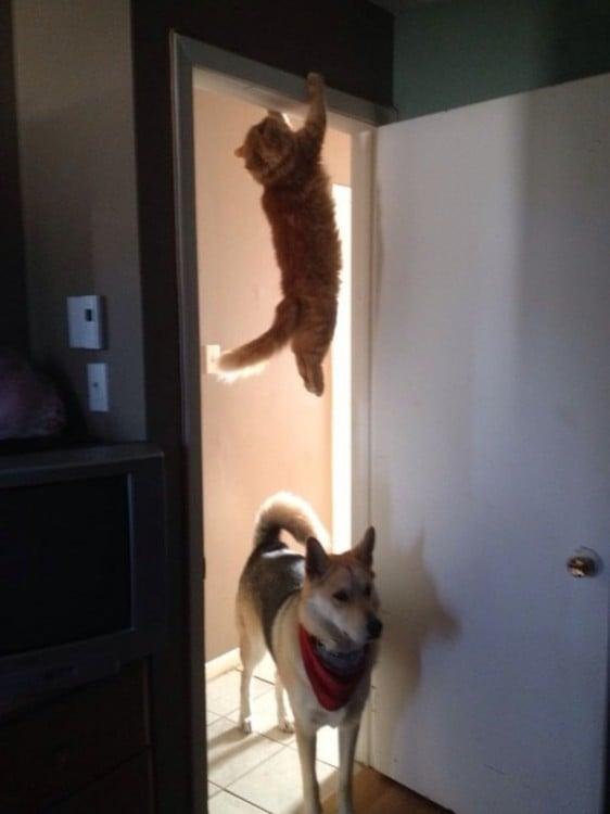 gato colgado en el techo arriba de un perro