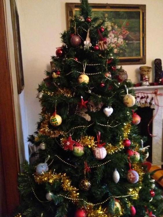 gato adentro de un arbol de navidad