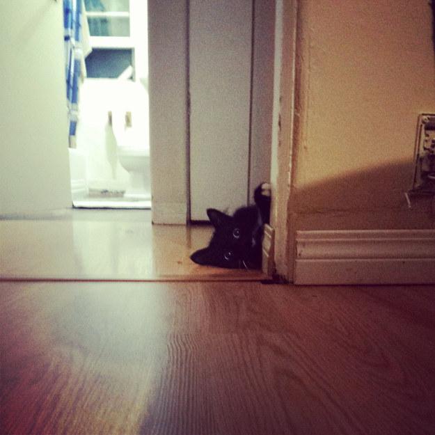 gato atras de una puerta