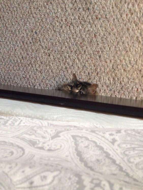 gato escondido debajo de los mueble