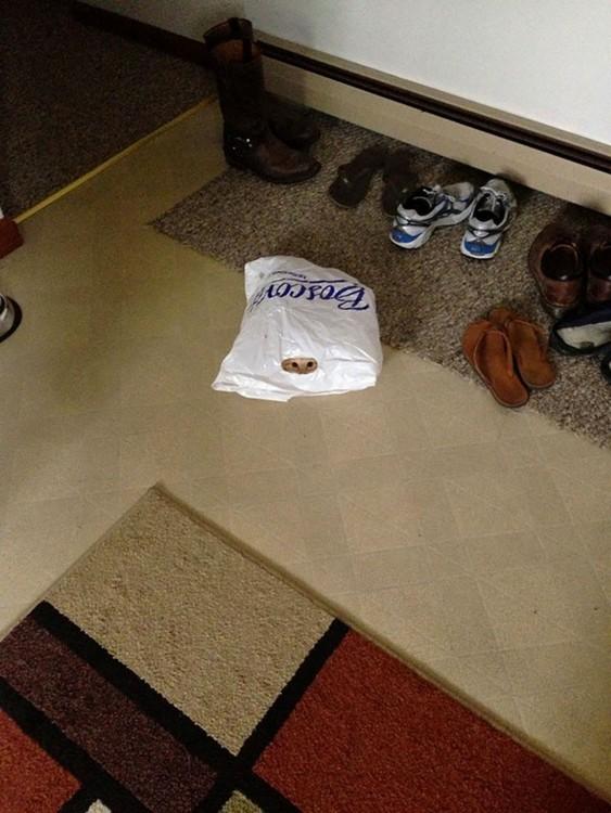 gato adentro de una bolsa