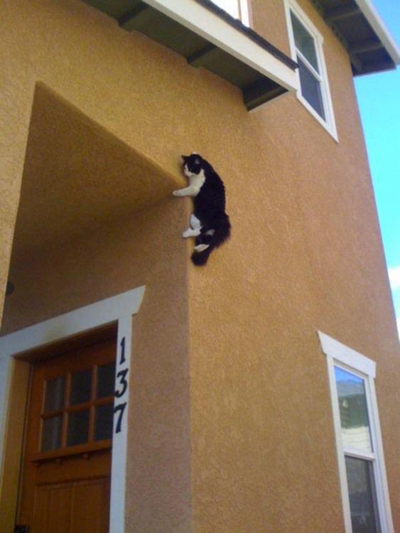 gato blanco y negro arriba de una pared