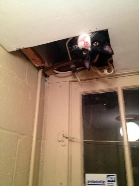 gato escondido en el techo