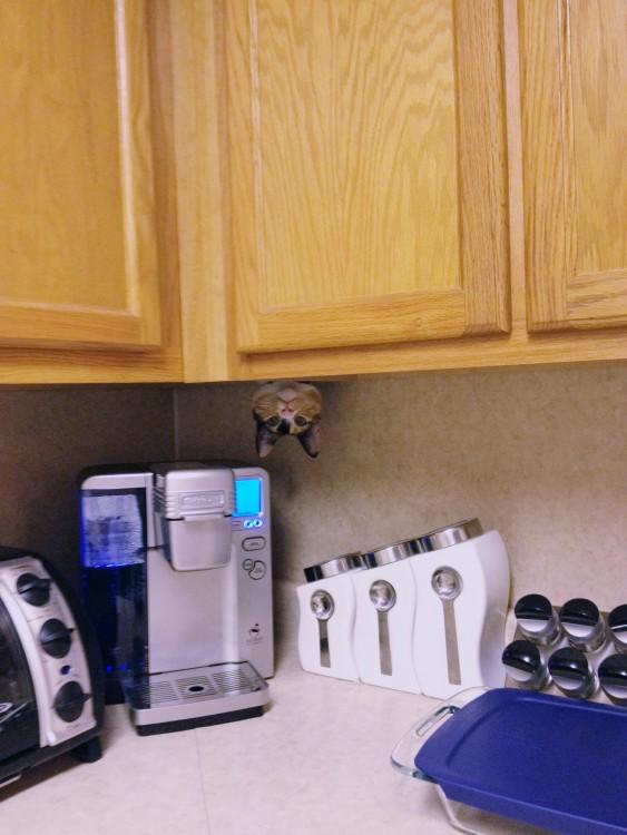 gato escondido en la cocina