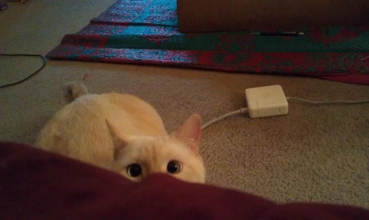 gato blanco escondido atras de un mueble