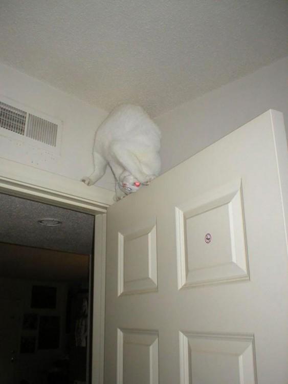 gato blanco arriba de una puerta