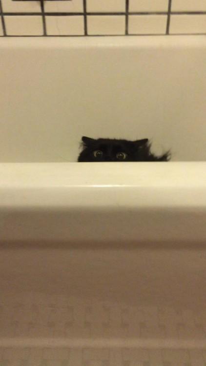 gato negro en la ducha