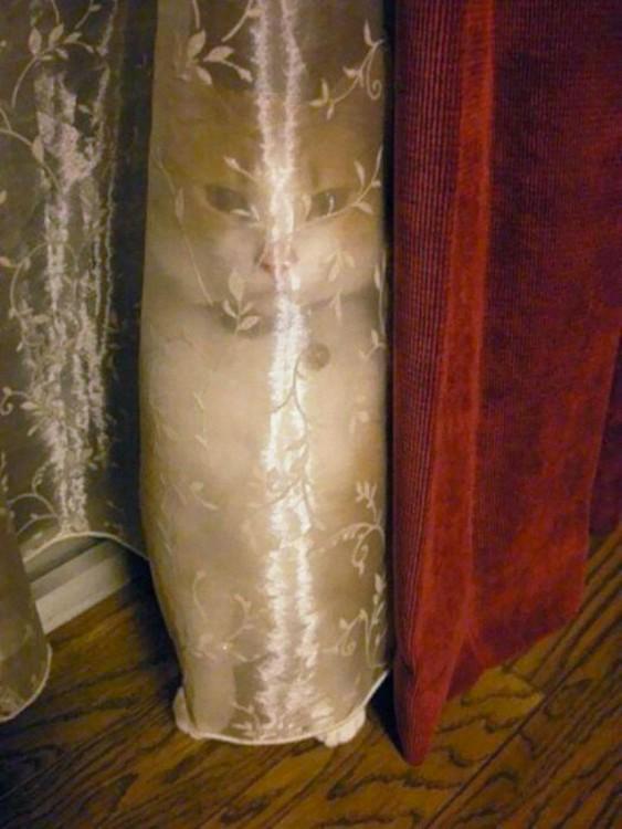 gato escondido atras de una cortina