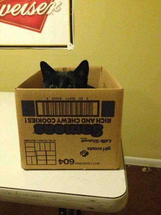 gato negro en caja
