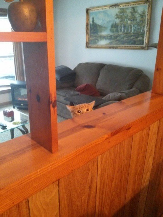 gato pardo camufleado