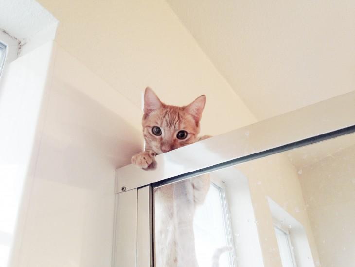 gato arriba de la ducha