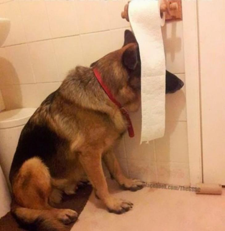 Perro escondido en papel higienico