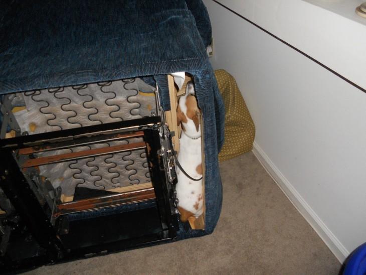 Perros se esconden debajo de un sillon