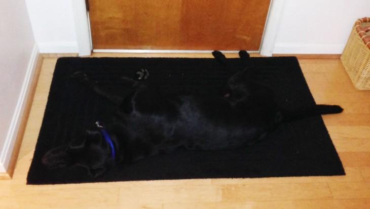 Perrota blan escondido en alfombra negra