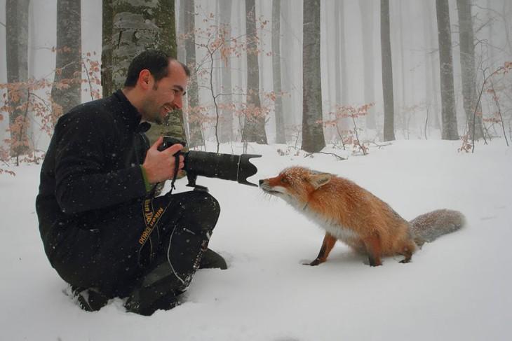 fotografo tomandole una foro a un zorro de color rojo