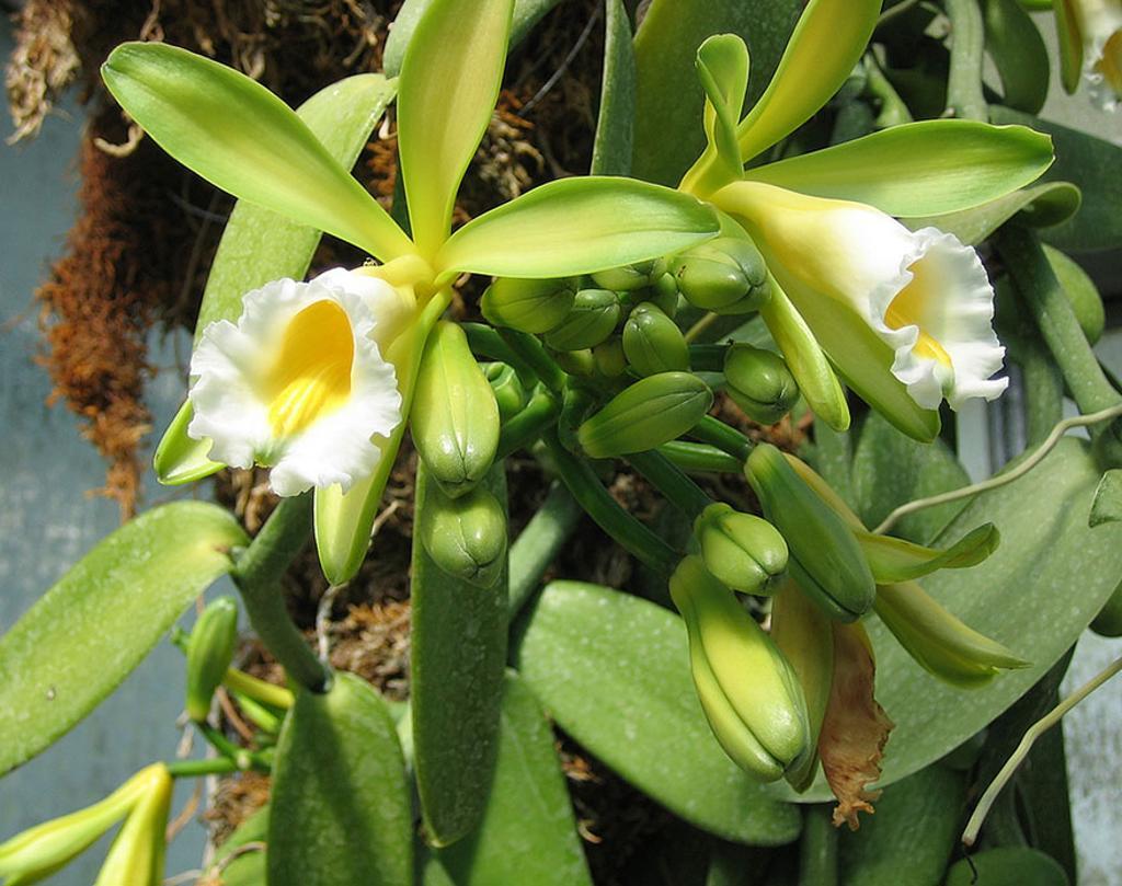 Como Crecen Frutas, Verduras Y Especies En La Tierra
