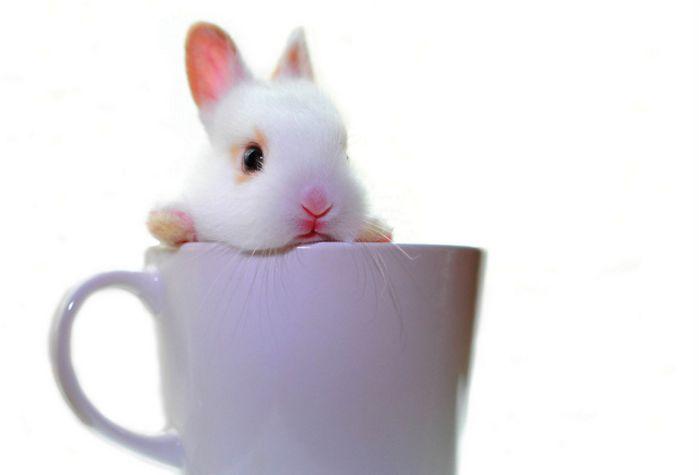 conejito blanco dentro de una taza blanca