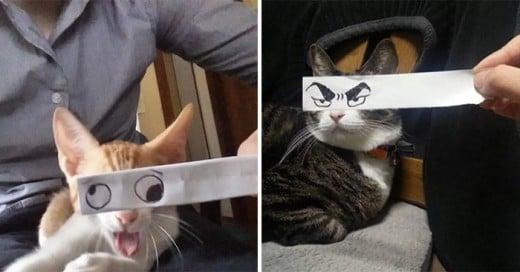 dueños gatos les dibujan ojos al estilo anime