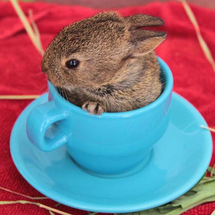 conejito dentro de una taza color azul