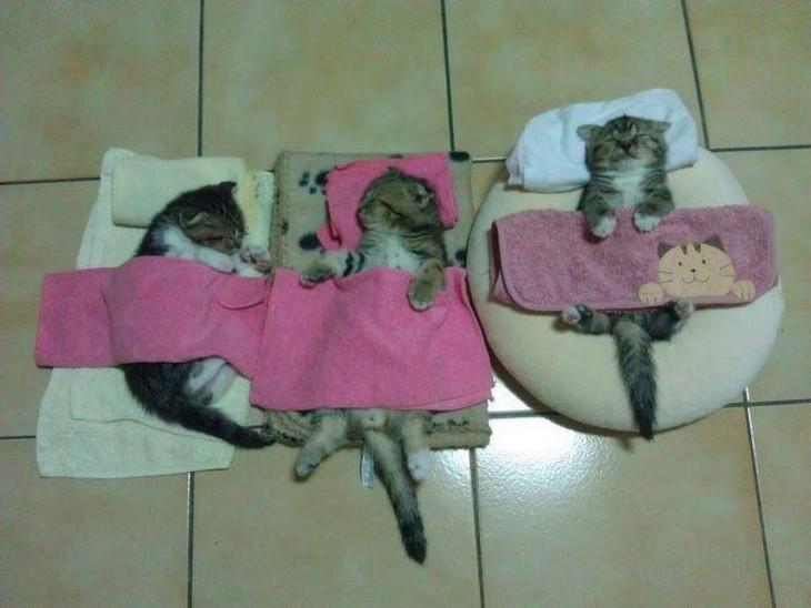 gato durmiendo en perchas