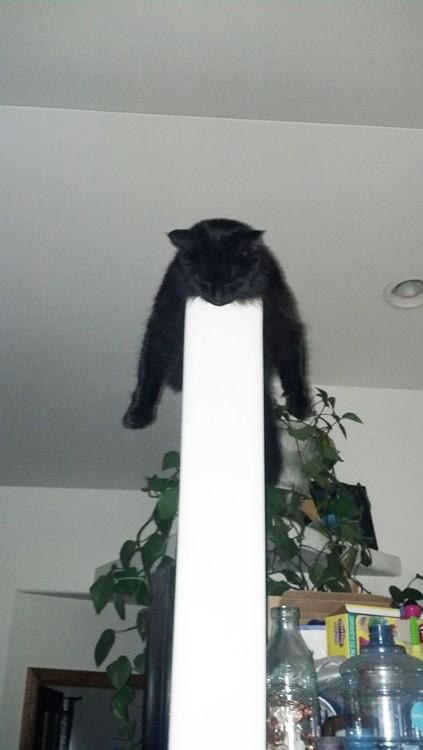 gato negro durmiendo en la pared