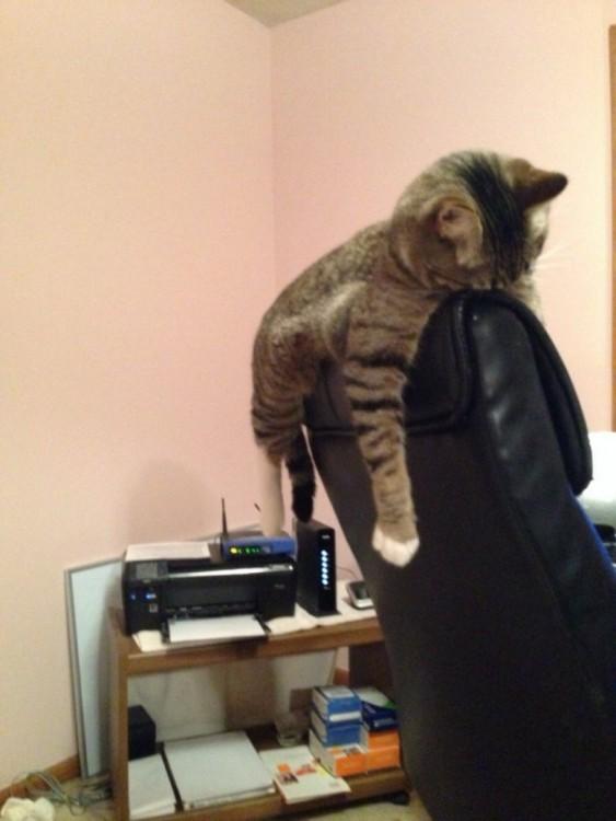 gato atigrado durmiendo en sillon