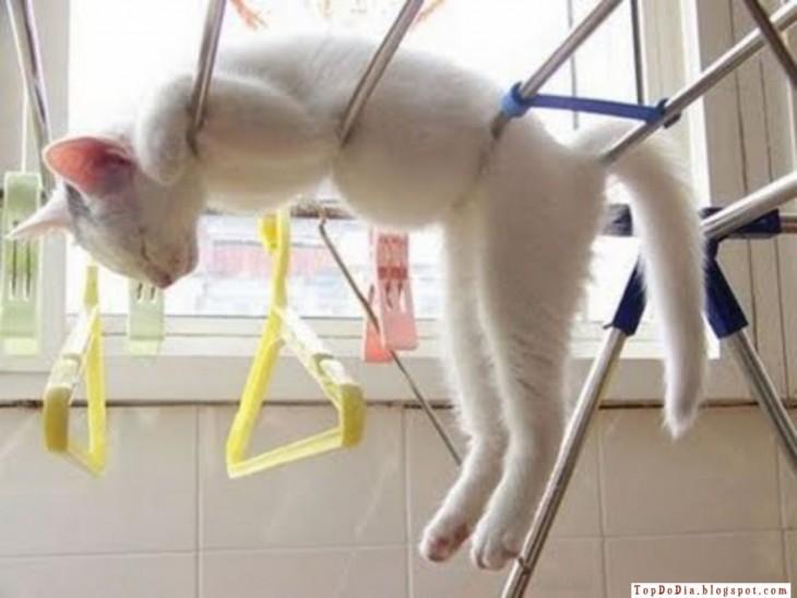 gato blanco durmiendo en rejas