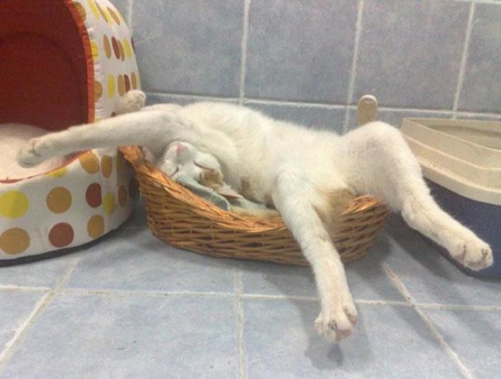 gato blanco durmiendo en un canasto