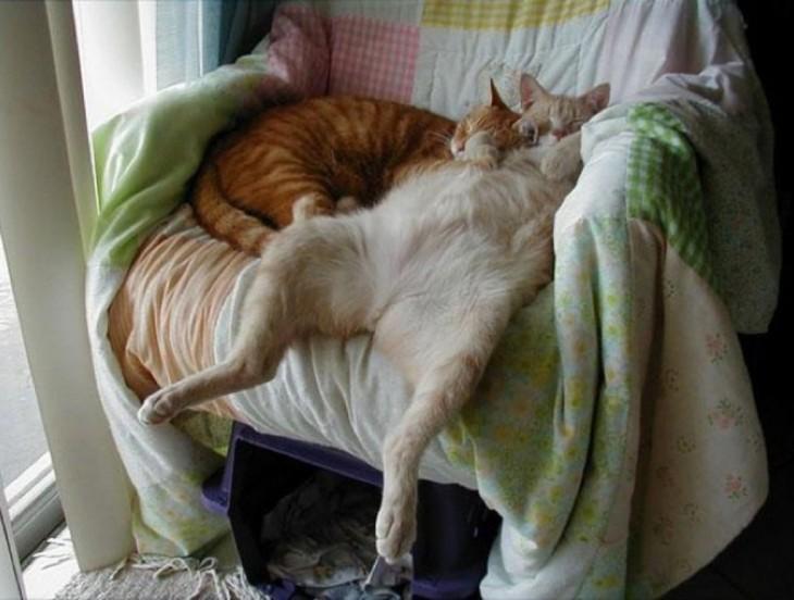 dos gatos durmiendo en un sillon