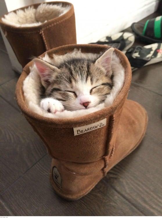 gato durmiendo adentro de una bota