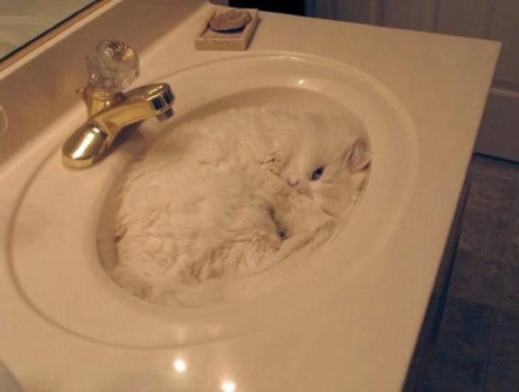gato blanco durmiendo en el lavabo
