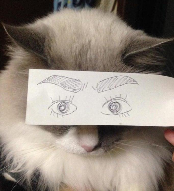 gato blanco con ojos grandes dibujados
