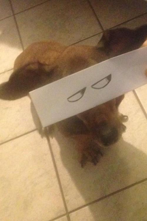 perro salchicha con ojos dibujados