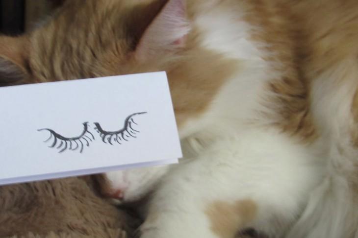 gato blanco y pardo con ojos durmiendo dibujado