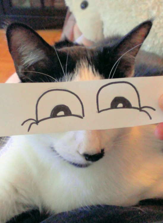 gato con grande ojos dibujados