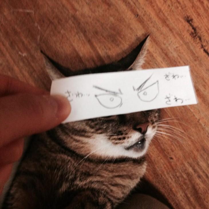 gato con ojos enojados dibujados