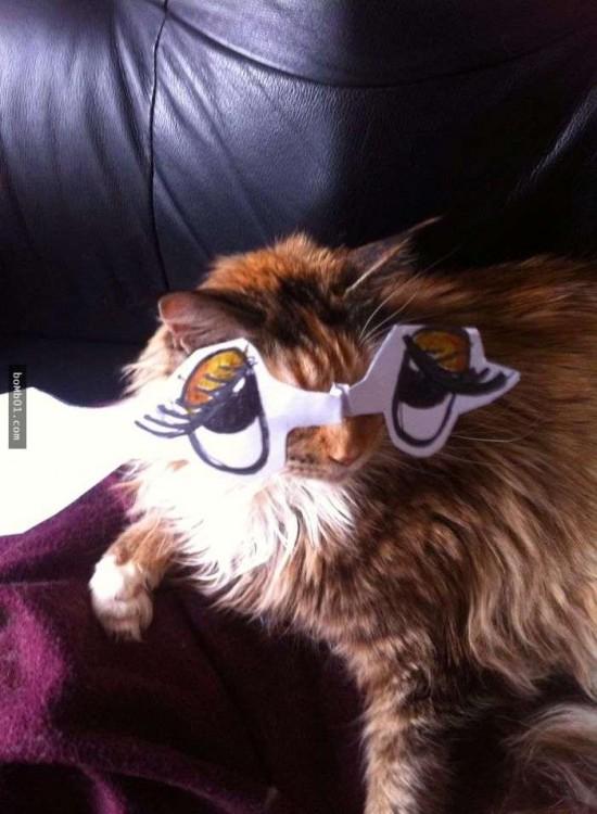 gato pardo con grandes ojos dibujados