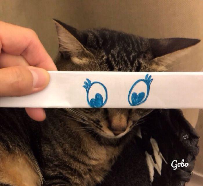 gato atigrado con ojos dibujados enamorado