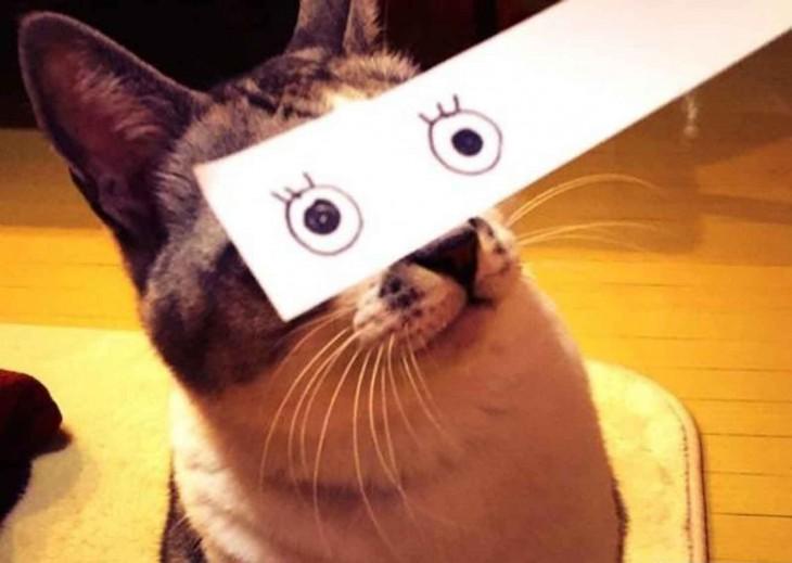 gato con ojos cara de sorpresa dibujados