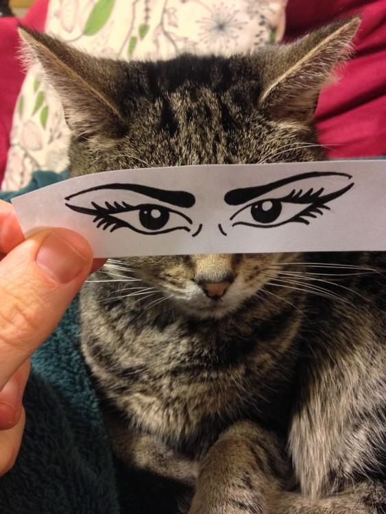 gato con ojos misteriosos dibujados