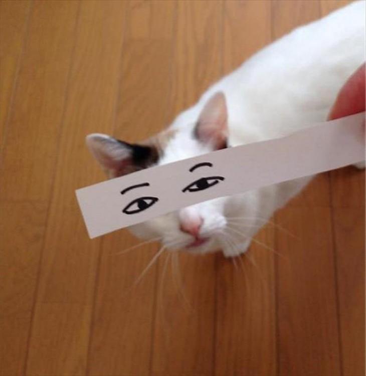 gato blanco con ojos dibujados