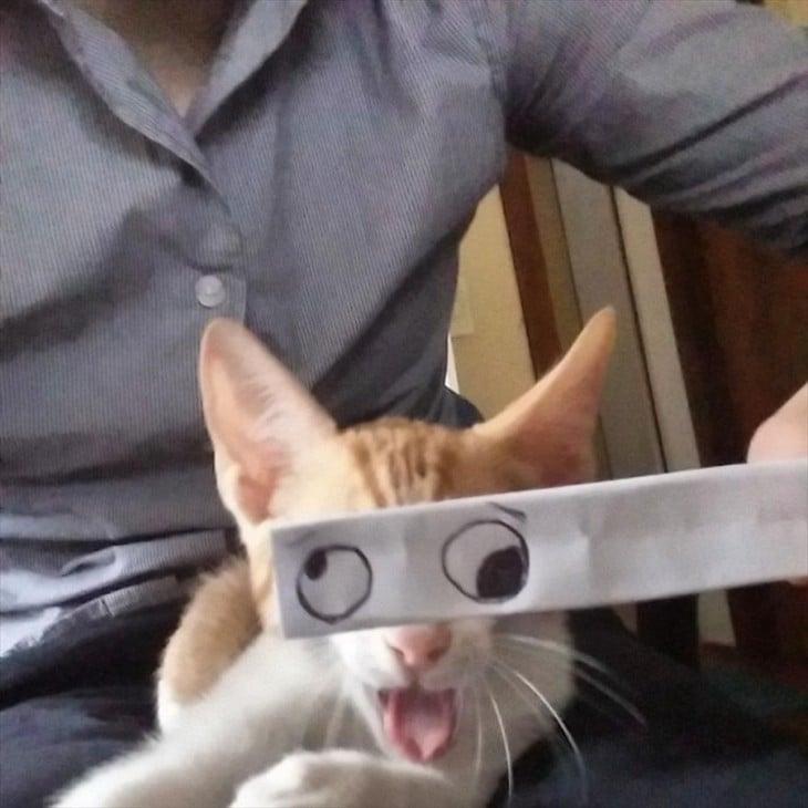 gato color pardo con ojos locos