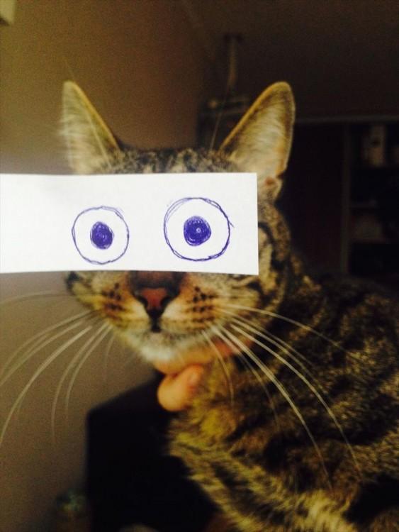 gato atigrado con ojos locos