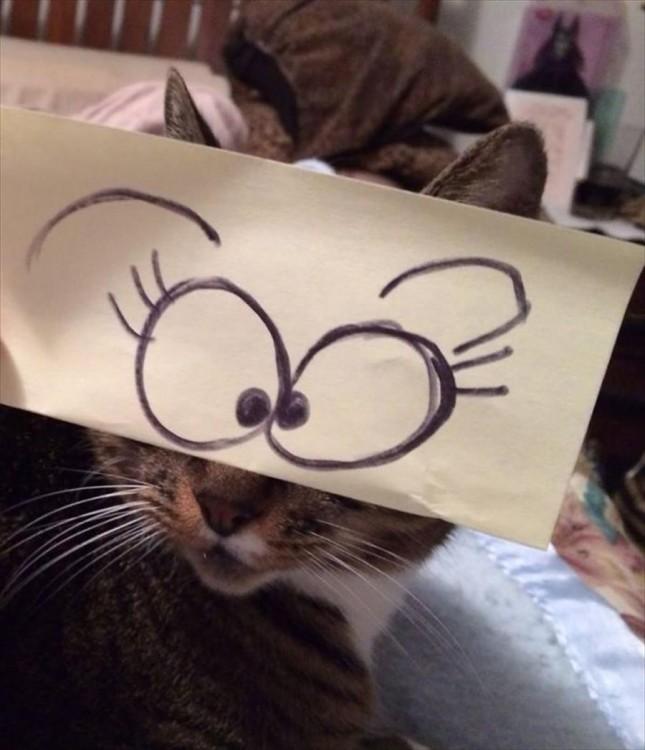 gato con ojos de sorpresa dibujados